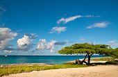 Divi-Divi Tree of Aruba. Sea. Sky. Ocean. Tropics. Caribbean.