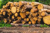 Stack Of Logs. Natural Wooden Background With Timber Cuts poster