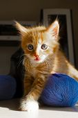 Cute Kitten And Ball Of Thread. Portrait Of A Cute Red Kitten. Funny Kitten And Knitting poster