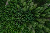 Aerial Top View Forest, Texture Of Forest View From Above, Copter Drone View, Panoramic Photo Over T poster