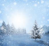 Winter Landscape With Snowy Winter Trees And White Snowdrifts . Winter Background, Winter Sunny Scen poster