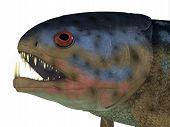 Rhizodus Fish Head 3d Illustration - Rhizodus Was A Carnivorous Fish That Lived In Freshwater Lakes  poster
