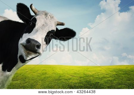 Funny cow on a green summer meadow poster