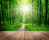 stock photo of path  - wood textured backgrounds in a room interior on the forest backgrounds - JPG