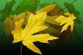 Leaf Montage