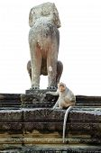 image of marmosets  - impaired monkey statue in Angkor  - JPG