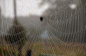 stock photo of spiderwebs  - Spider web with morning dew on it - JPG