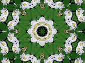 Wild Rose Circle poster