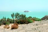 Coast Of The Dead Sea. Israel