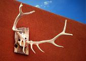 Antlers and Adobe