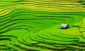 stock photo of farm land  - Beautiful terrace rice field with small house in northwest Vietnam - JPG