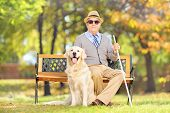 image of sitting a bench  - Senior blind gentleman sitting on a wooden bench with his labrador retriever dog - JPG
