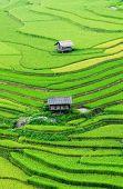 Beautiful terrace rice field in Vietnam