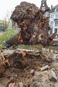 AMSTERDAM, THE NETHERLANDS - OCTOBER 28, 2013: Fallen tree lies in the canal at Leidsegracht  in Amsterdam, October 28, 2013. This is the consequence of strong wind in western Europe.