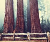Sequoia National Park in USA