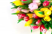Spring Tulips On White Background. Happy Mothers Day, Romantic Still Life, Fresh Flowers