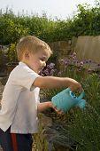 Young Boy Watering Garden.