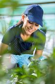 smiling female gardener working in greenhouse