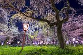 Kyoto, Japan at Hirano Temple festival grounds in spring. The lantern reads