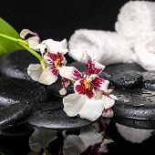 Spa Concept Of Orchid Cambria Flower With Drops And White Towels On Zen Stones In Water, Closeup