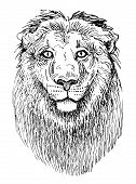 artwork lion, sketch black and white drawing of head animals