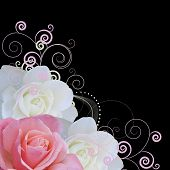 pic of white roses  - pink and white roses border with swirls isolated on black background - JPG