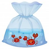 Illustration of the crabs inside the plastic on a white background