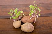 Potatoes sprouting in the kitchen table