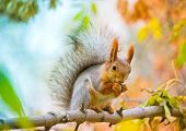 Squirrel Eating Nut On The Branch