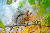 Squirrel Washes On The Branch