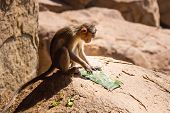 Monkey In The Mountain