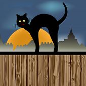 cat on a fence nighttime