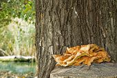 picture of fungus  - Fungus on tree trunk - JPG
