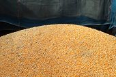 stock photo of truck farm  - Pile of raw kernel corn beans on truck