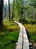 Boardwalk Through Trees