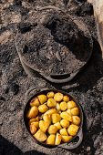 Traditional ushant island stewed lamb, cooked under the soil, with golden potatoes, Brittany, France