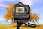 Dslr camera photographing autumnal tree