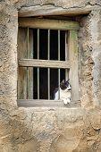 image of jabal  - Image of a cat sitting on window in a village on Saiq Plateau in Oman  - JPG