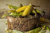 Still life with corn placed on the timber.