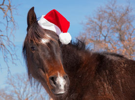 image of horse wearing santa hat  - Cute dark bay horse wearing a Santa hat - JPG