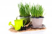 Grass In Pots And Garden Tools