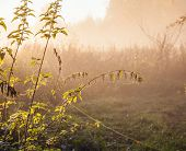 Autumn landscape with fog and a sunrise. Focus on foreground