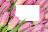 Tulips Flowers In Spring Or Mother's Day With Empty Greeting Card And Copyspace
