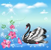 picture of black swan  - Elegant black swan and flowers on the blue sky backgraund - JPG