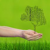 Concept or conceptual black ecology text word cloud tree in man or woman hand on green blur background and grass