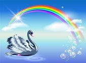 stock photo of black swan  - Elegant black swan and rainbow with clouds - JPG