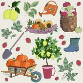 Vector Illustration of Set Gardening Elements. Set of fruits and vegetables.