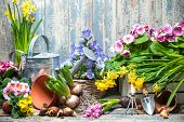 Gardening tools and flowers in the garden