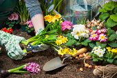 picture of plant pot  - Gardener planting flowers in pot with dirt or soil at back yard - JPG