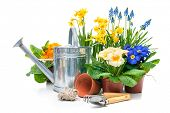Spring flowers with gardening tools isolated on white background